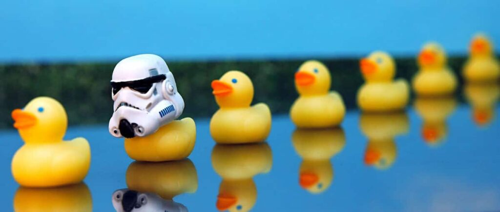 Ducks in a row, one has a stormtrooper hat